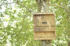 The Bat House: a Green, Energy Eff