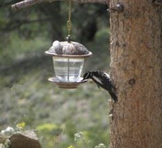 Convert a bird feeder into a wild