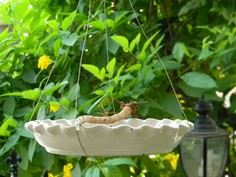 Make your own hanging bird feeder