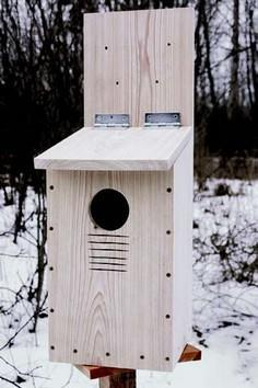 How to build a nest box for a screech owl