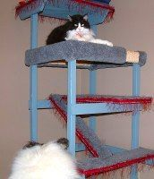 Multi-level Cat Condo