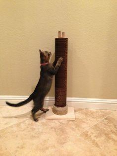 Cat Scratcher Tower