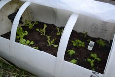 Portable can greenhouse