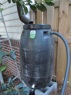 Make a Rain Barrel from a Pickle Barrel