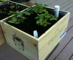 Wine box wicking planter boxes