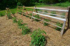 Recycled Pallets for tomato trellis