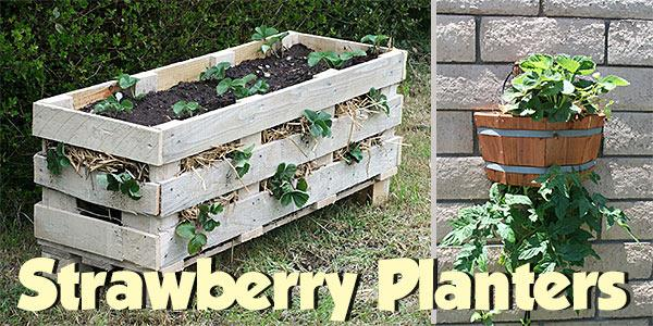 Strawberry Planters Plans at PlansPin.com